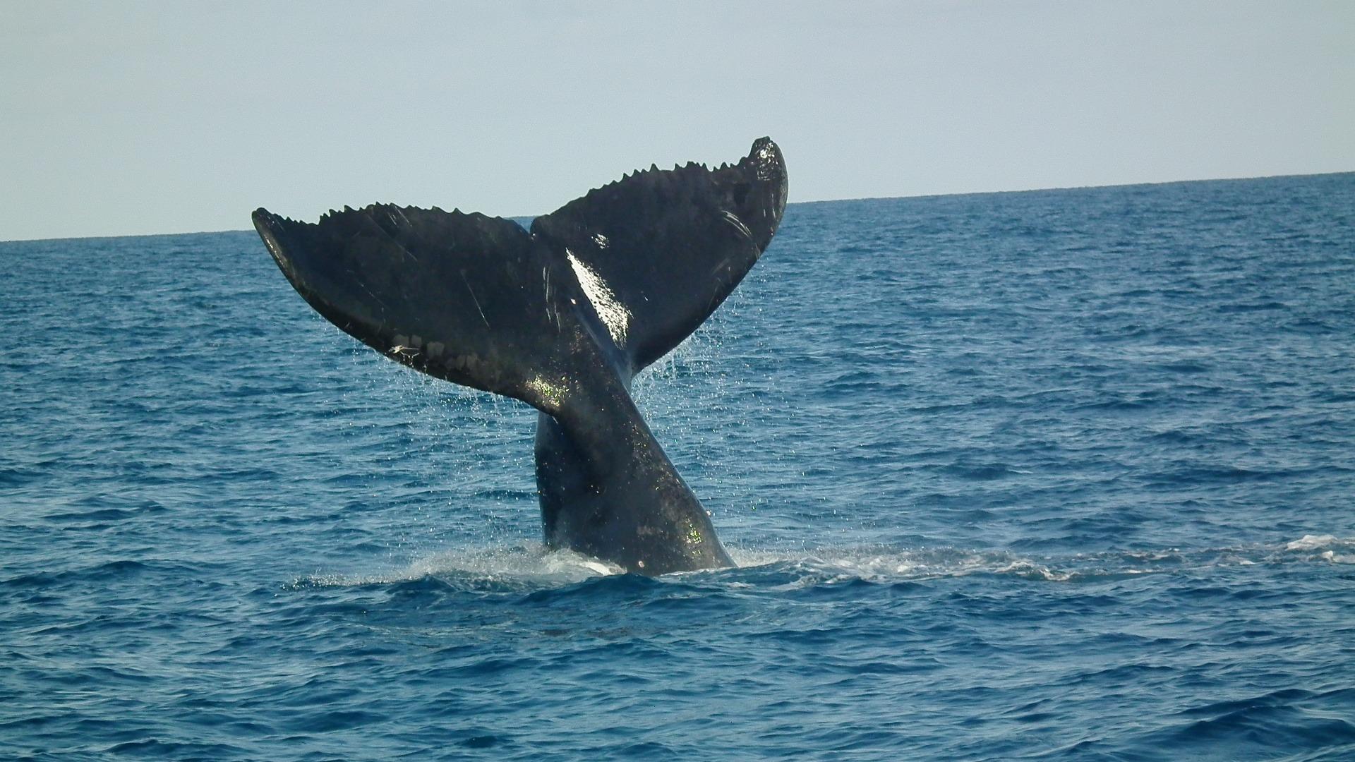 haai.valt walvis aan