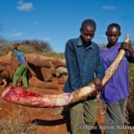 Wat is wildlife crime?